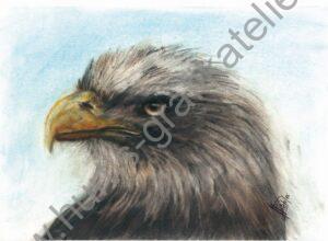Vogel12