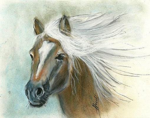 Pferdeportrais02